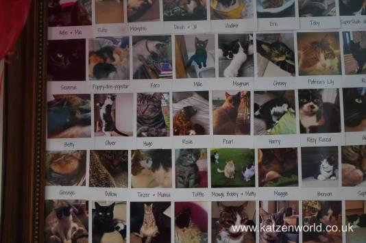 Katzenworld FurCats0016