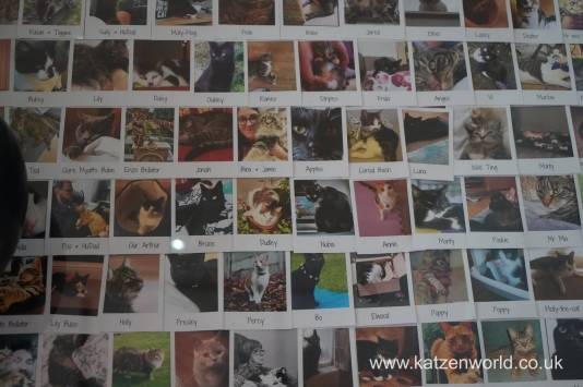 Katzenworld FurCats0017