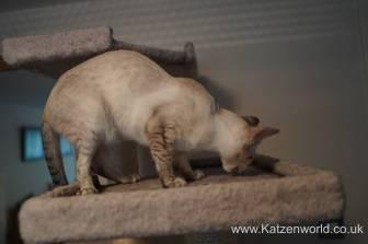 Katzenworld Almo Nature Snack0015