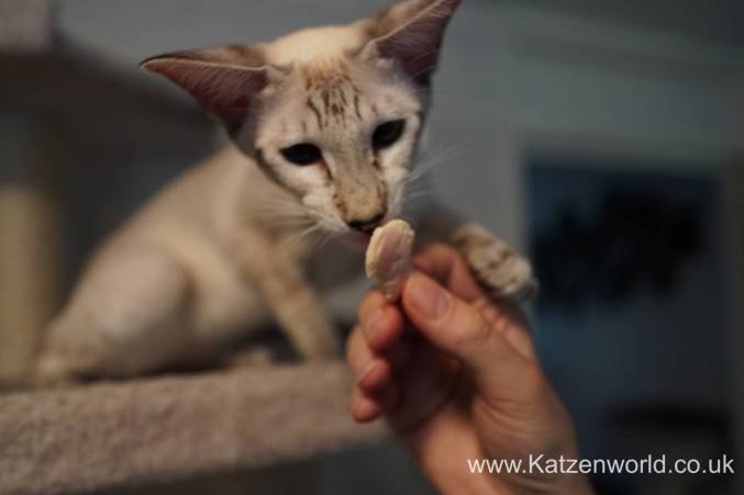 Katzenworld Almo Nature Snack0017