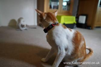 Katzenworld PetPointer0010