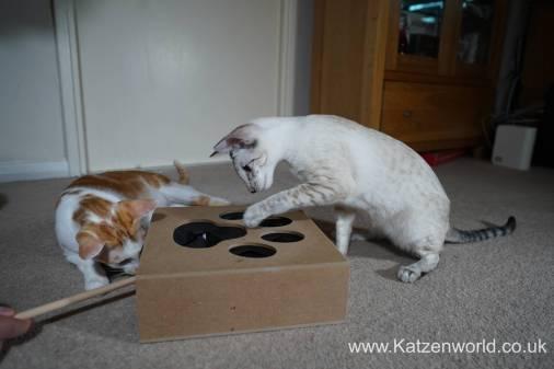 Katzenworld Whack-a-Mouse0011