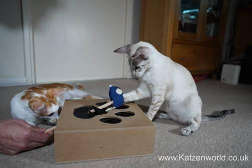 Katzenworld Whack-a-Mouse0012