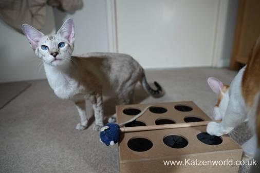 Katzenworld Whack-a-Mouse0019