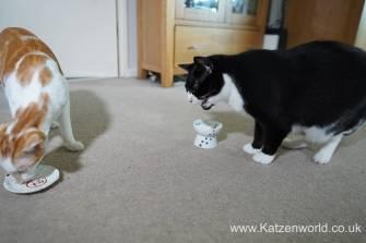 Katzenworld webbox cat treats0024