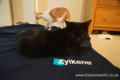 Katzenworld Zylkene0012