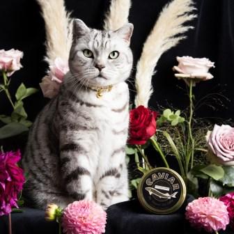 Caspian+Luxury+Cat+Collar+01+Cheshire+&+Wain+