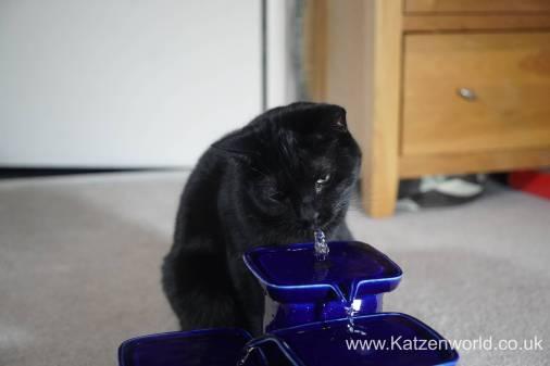 Katzenworld Miaufountain0014
