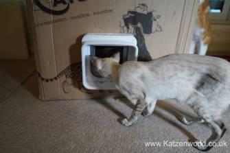 Katzenworld SureFlap0015