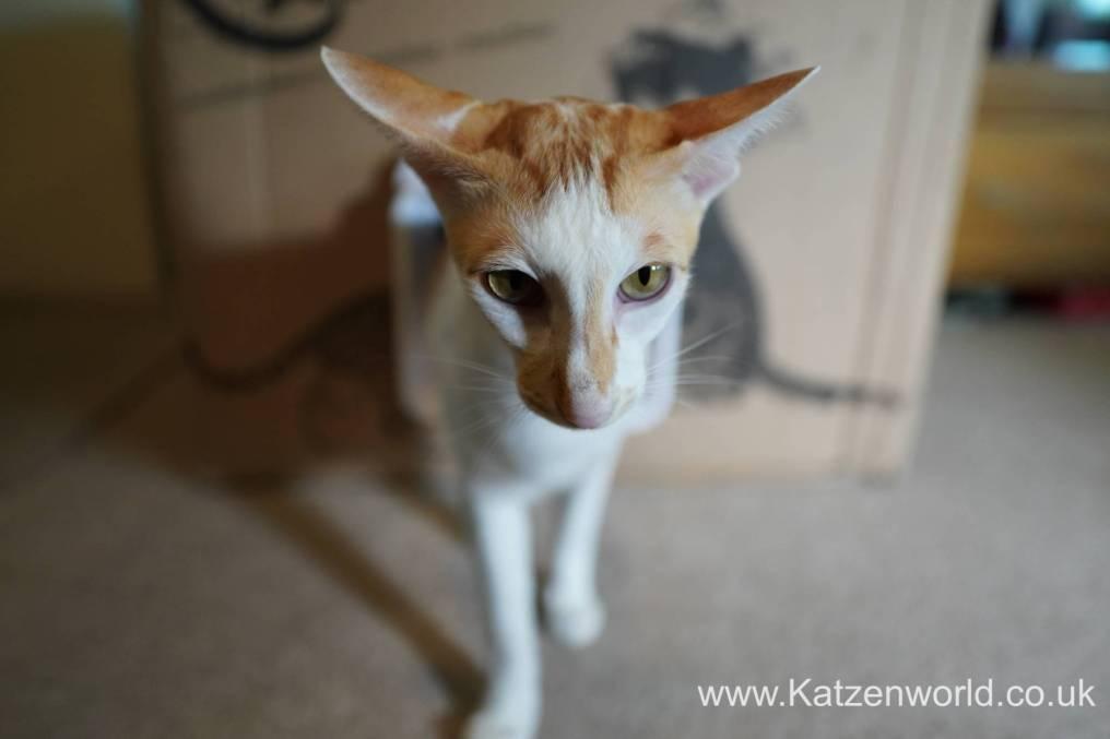Katzenworld SureFlap0018