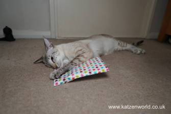 Katzenworld Christmas Stories0009