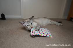 Katzenworld Christmas Stories0011