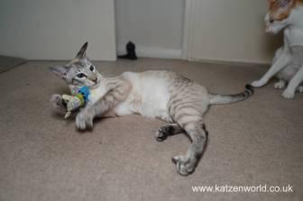 Katzenworld Christmas Stories0025