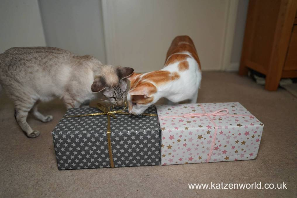 Katzenworld Christmas Stories0028