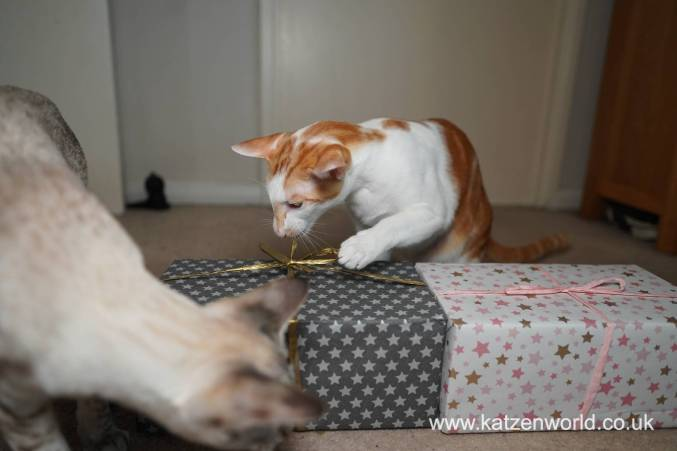 Katzenworld Christmas Stories0031