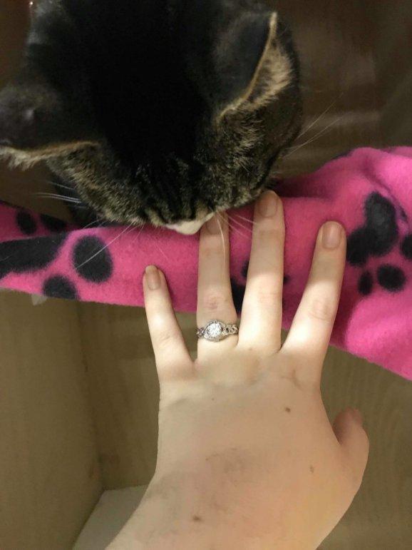 Petrus-bedroom-Cat-Cafe-Engagement