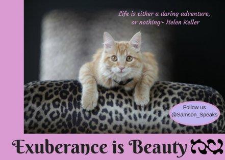 Samson Exuberance is Beauty