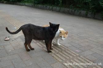 Katzenworld Fukuoka Street Cats0003 (1)