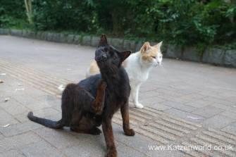 Katzenworld Fukuoka Street Cats0005