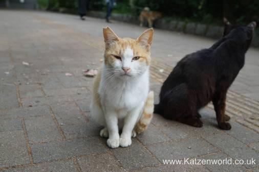Katzenworld Fukuoka Street Cats0007