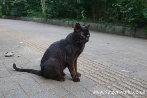 Katzenworld Fukuoka Street Cats0008