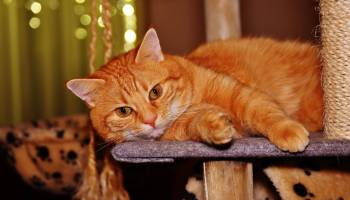 Why Your Cat Might Prefer a Home and Pet Sitter This Summer