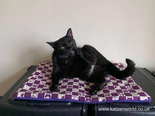 Katzenworld Cat Zen Mat0022