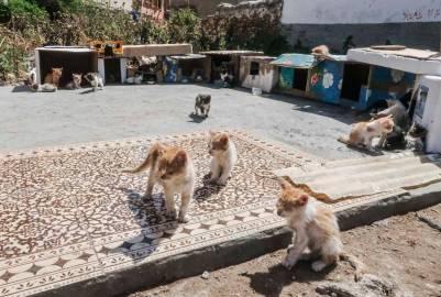 Kitten City-2