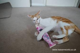 Katzenworld Japanese cat toy0003