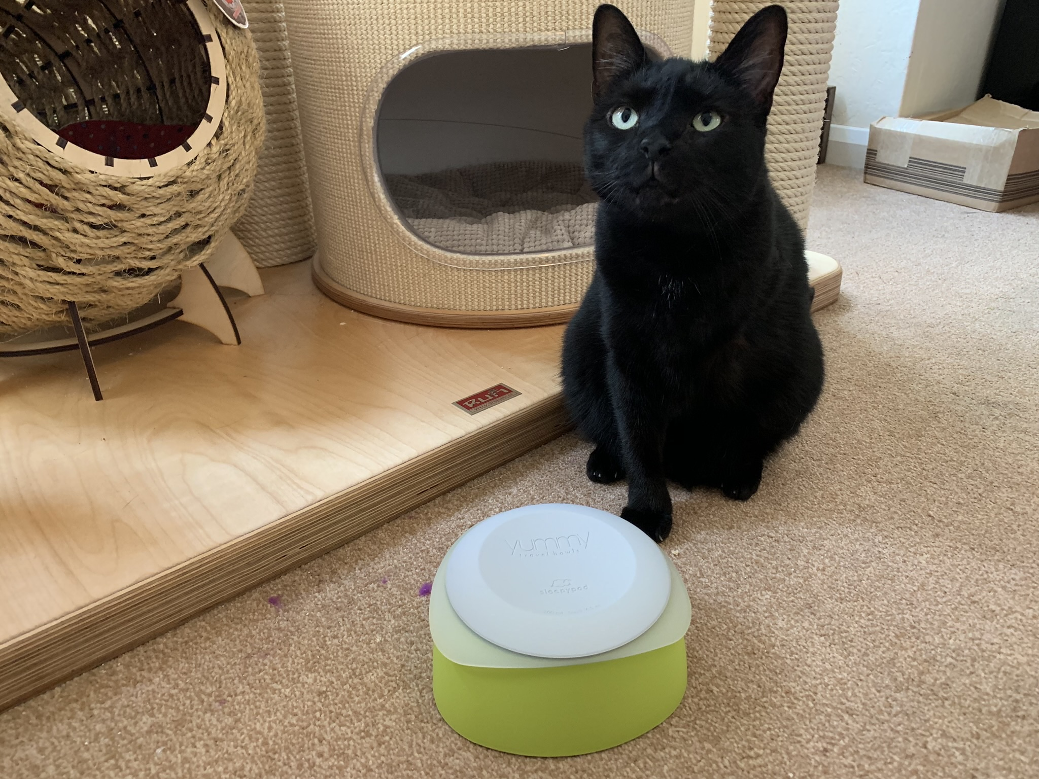 Nubia: I Have got a new Special Bowl!