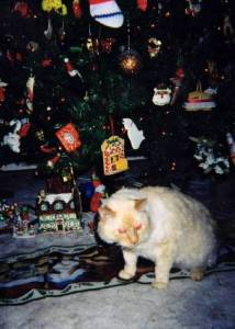 Lookng for presents