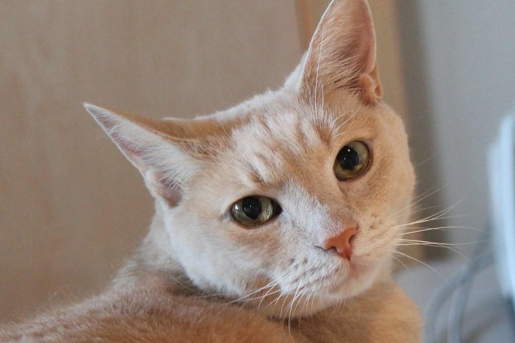Advice On Kidney Disease In Cats Katzenworld