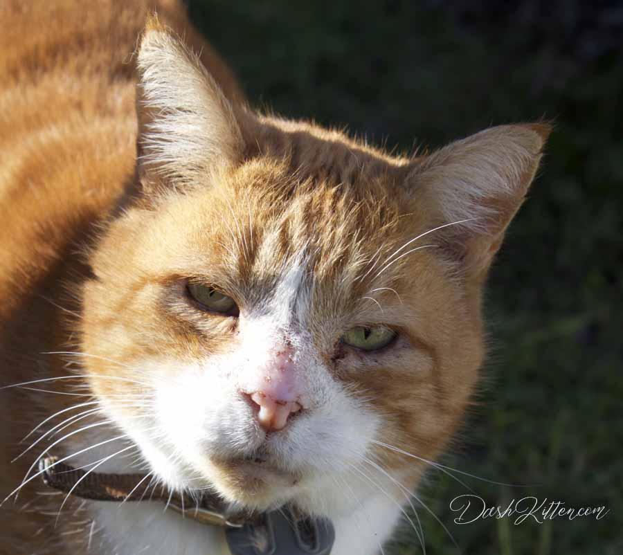Jack the ginger cat
