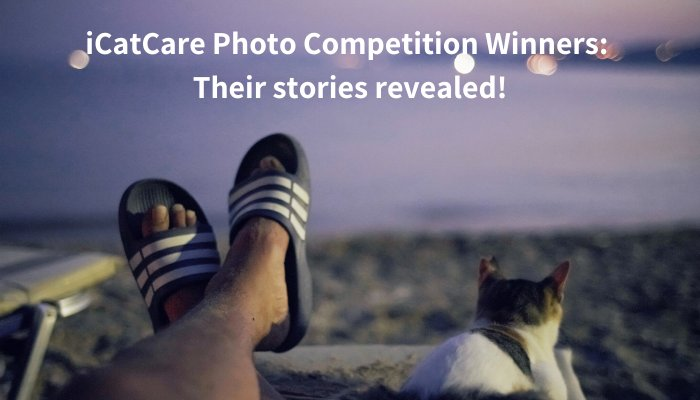 2019 'Cat-Human Relationships' photography competition winner – Jonas Chan from Hong Kong