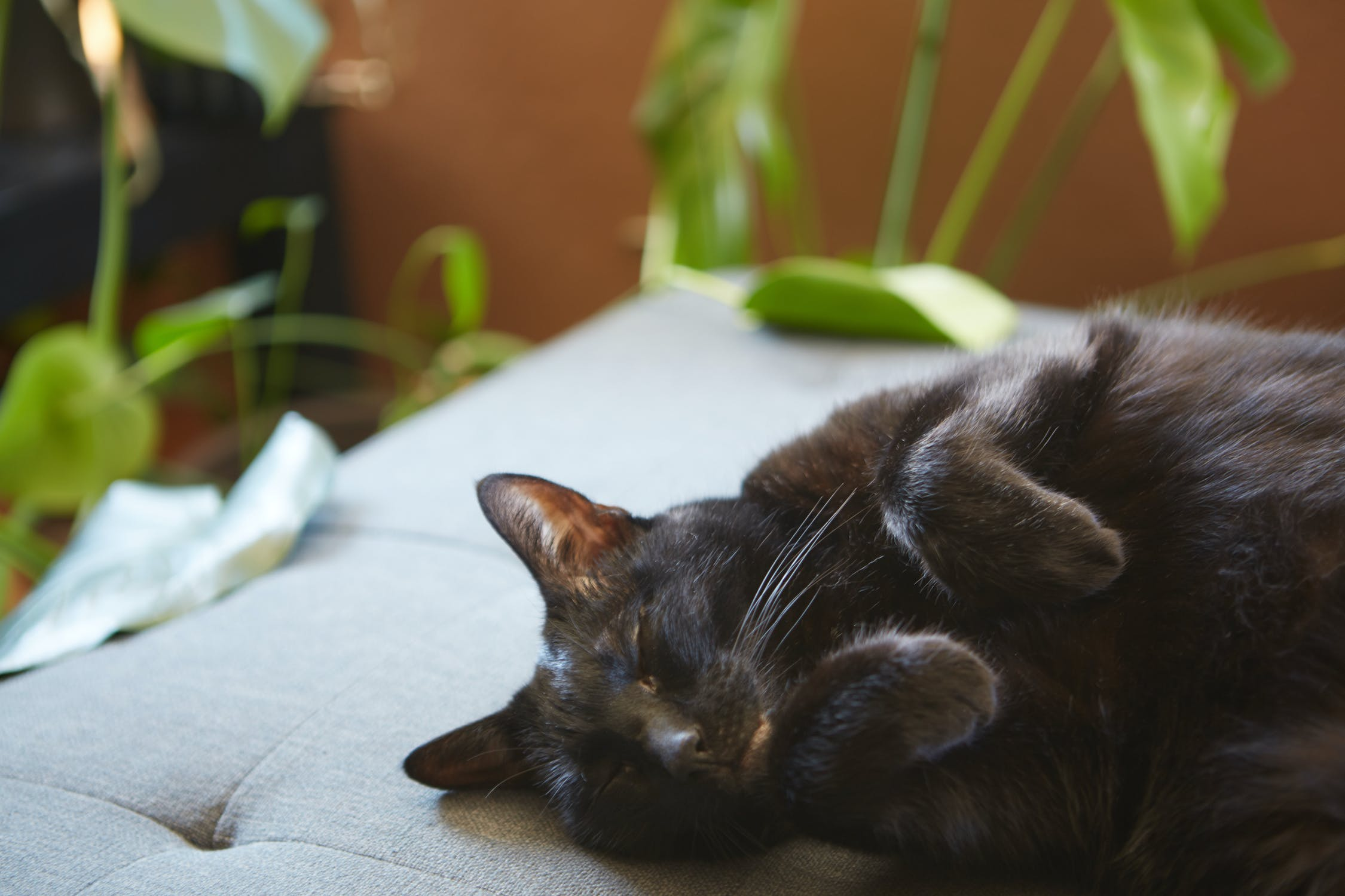 Infographic: A Cats Purr Healing Power infographic