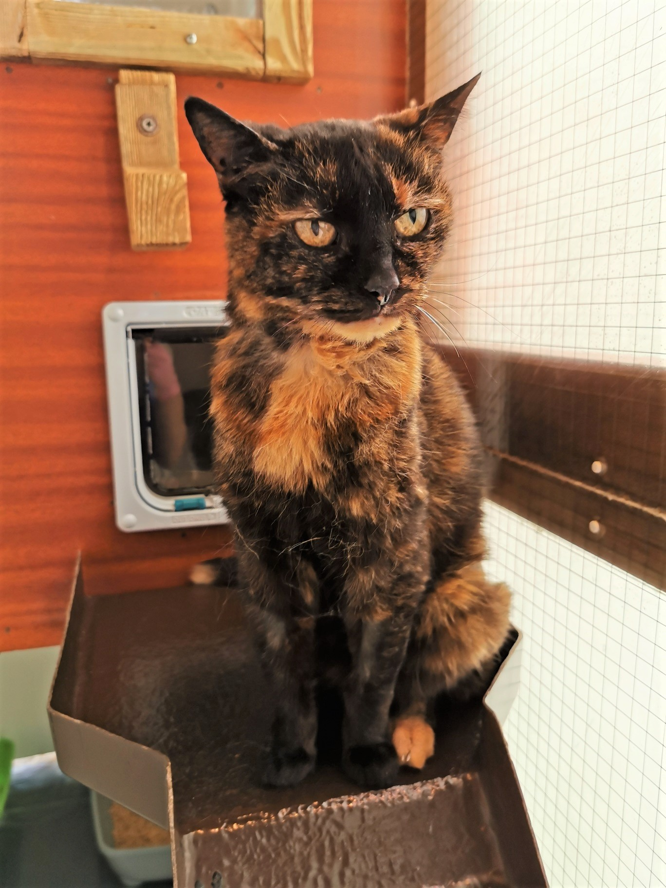 21-year-old Cat Rescued From Desperate Life in a Norfolk Car Park