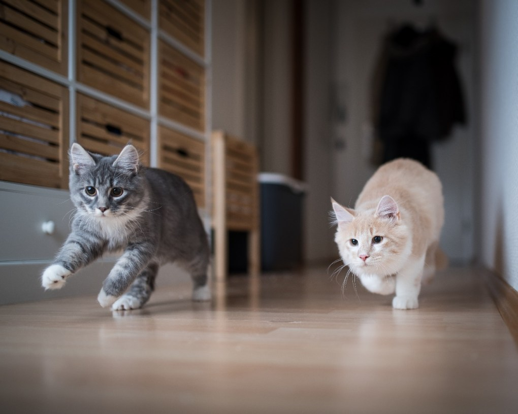 Are Laser Pointers Bad for Cats? - Katzenworld