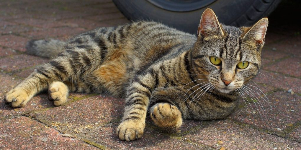 Keeping Cats Safe: Cats and household chemicals