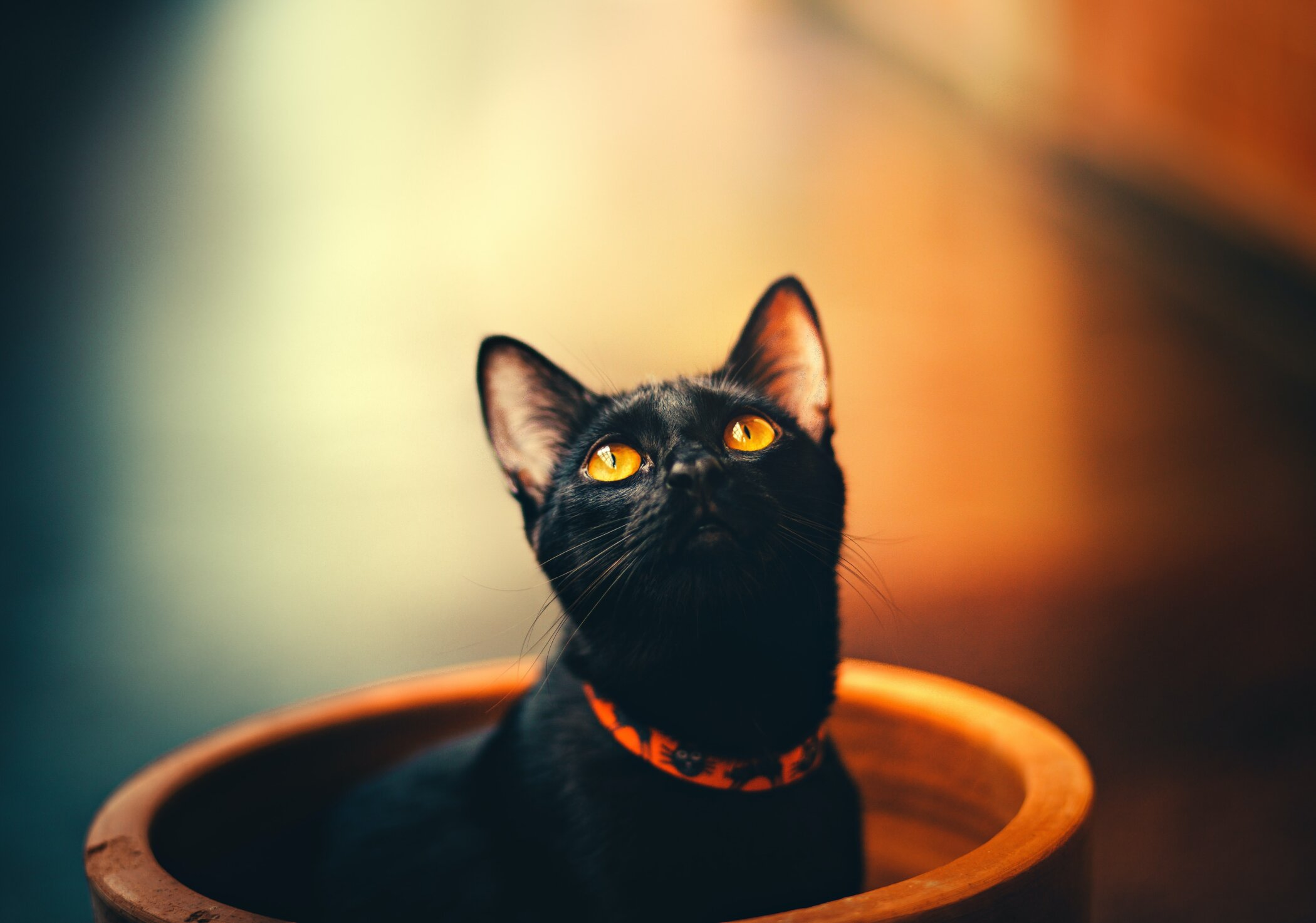 Today 27th October, Wire Fence Will Donate 100% of its Profit for National Black Cat Day - Katzenworld