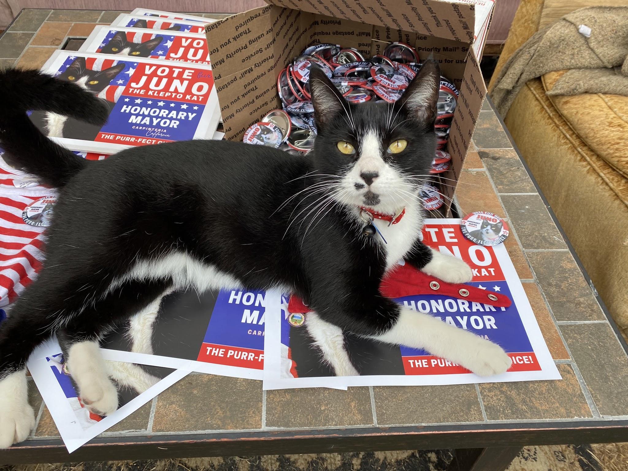 Guest Star Cat: Meet Juno, The Klepto Kat - Katzenworld