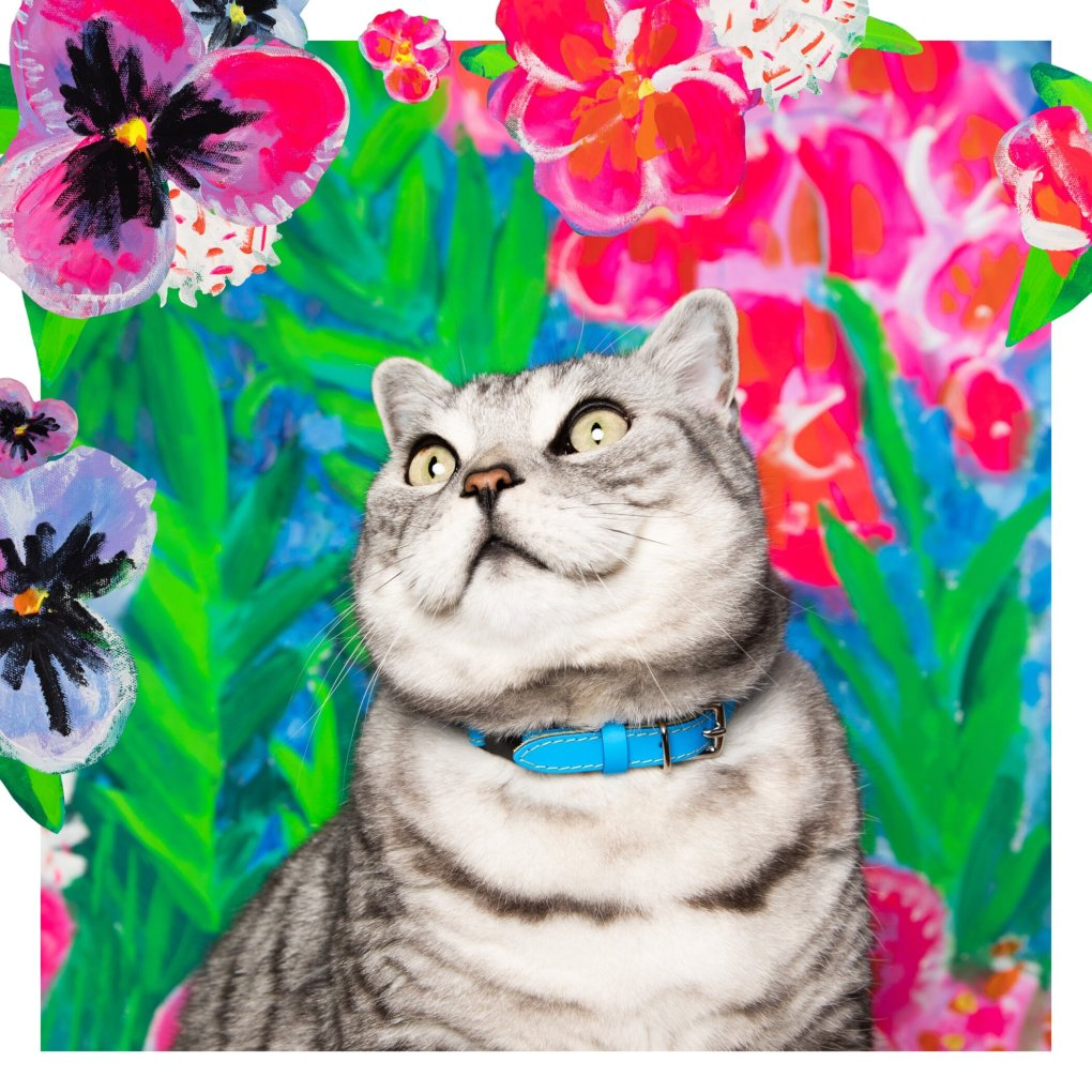 A cat sitting in front of a flower wall Description automatically generated with low confidence