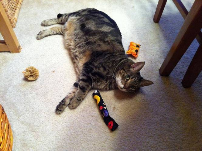 Does your cat need a toy-tervention.3