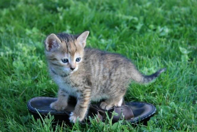 Image 7 - kitten on shoe