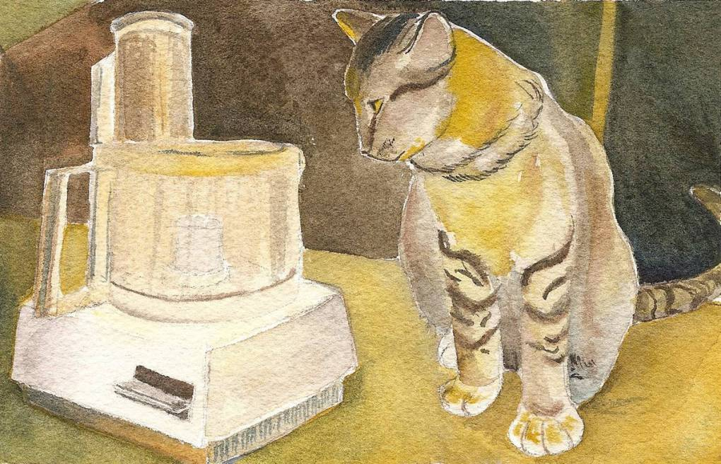Tabby cat with food processor.