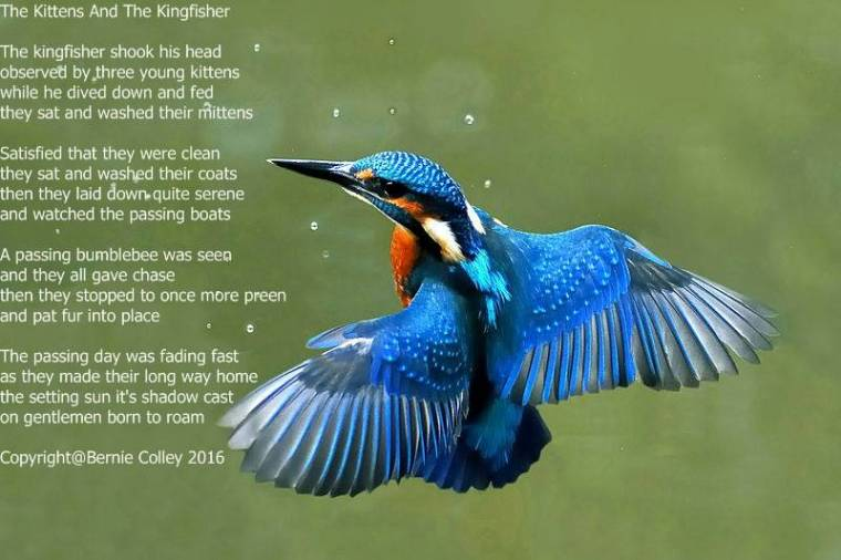 the kittens and the king fisher