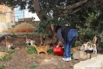 Malta - Swieqi 2 - ©2016 Islands of Cats 2