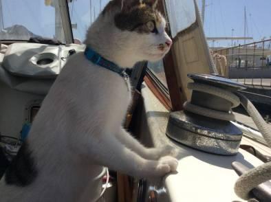 onboard Fandancer - lookout duties