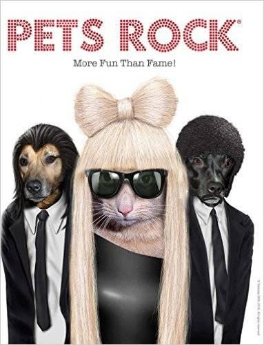 pets rock front