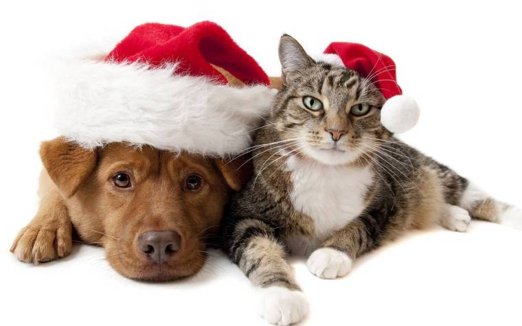christmas-wallpaper-with-a-cat-and-a-dog-wearing-christmas-hats-hd-cat-and-dog-wallpaper