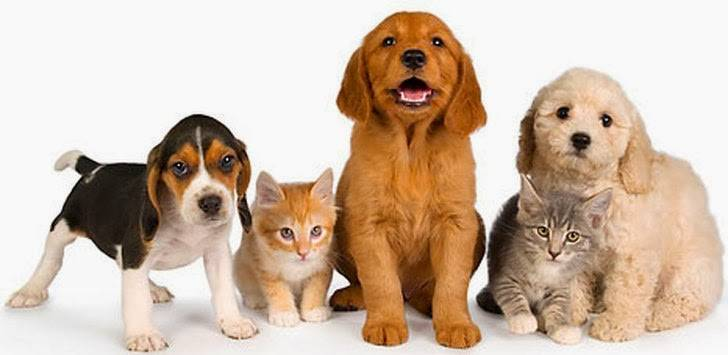 pet-owners-apps
